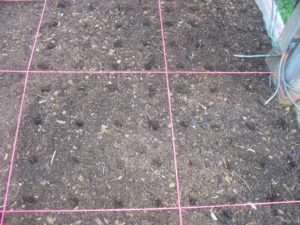 this picture shows 16 evenly spaced indentations in a square foot where carrot seeds will be sown.